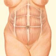 abdomen diagram 2